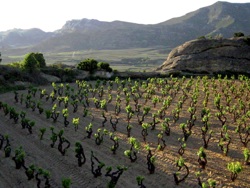 Rioja Slow Tours